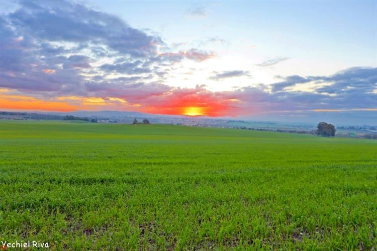 Support Israel and get this picture: Jezreel Valley