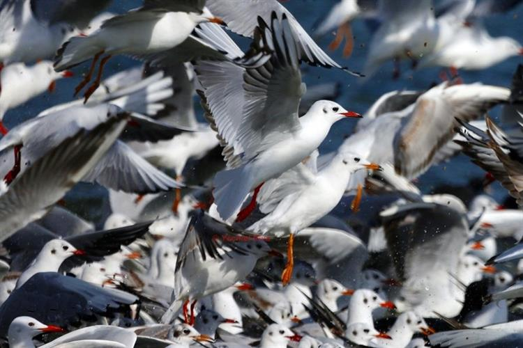 Support Israel and get this picture: Laridae