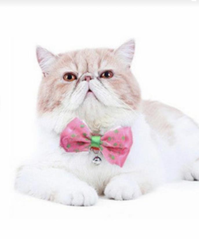 קולר לחתול צבעוני + פפיון ופעמון