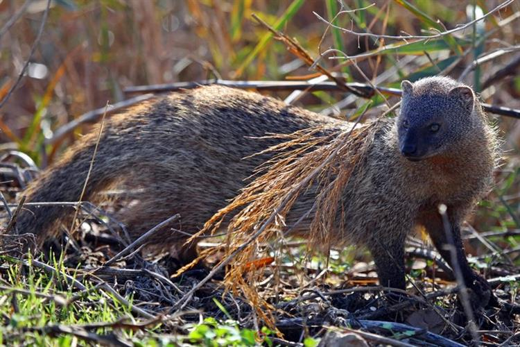 Support Israel and get this picture: Mongoose