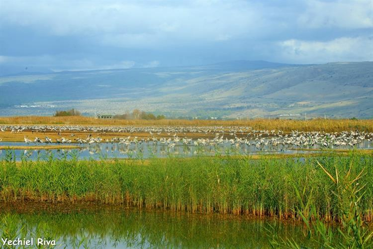 Support Israel and get this picture: Galilee
