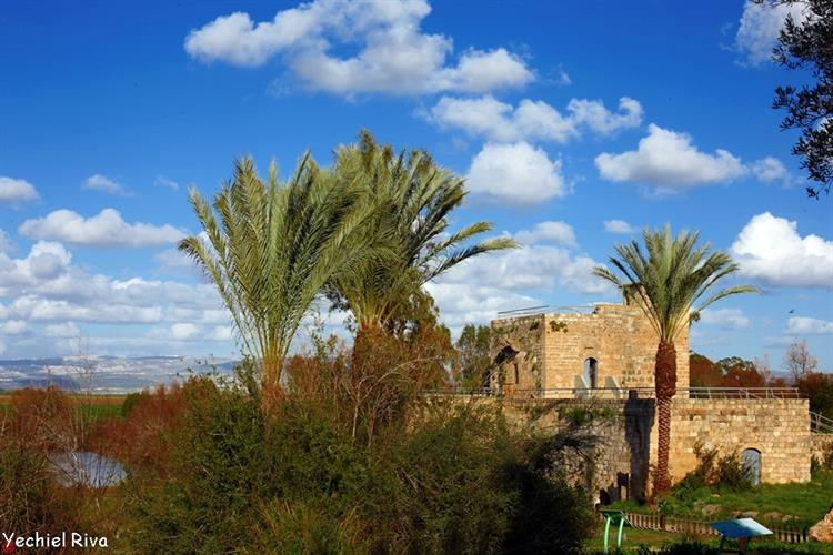 Support Israel and get this picture: The Ein Afek Nature Reserve