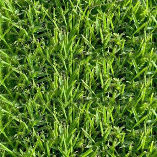 דשא טבעי בופלו