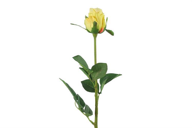 ורד בר צהוב גובה 70 סמ'