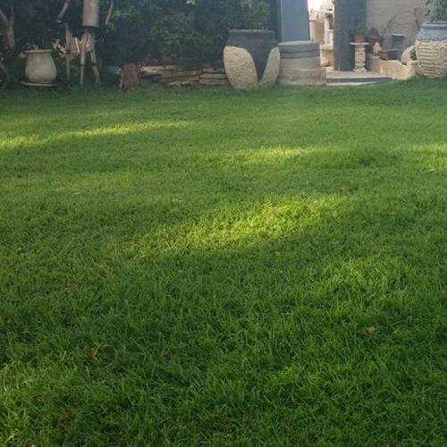 דשא טבעי,דרבן