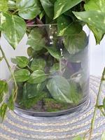 סידור צמחי גינה בכלי זכוכית