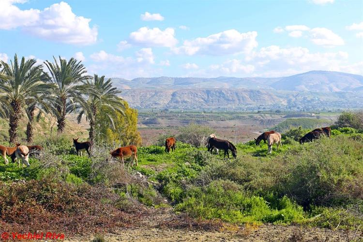 Support Israel and get this picture: Jordan Rift Valley