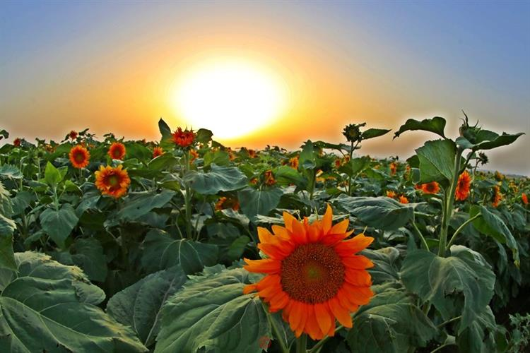 Support Israel and get this picture: Sunrise, Jezreel Valley