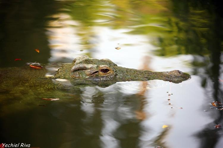 Support Israel and get this picture: Alligators Farm, Hamat Gader
