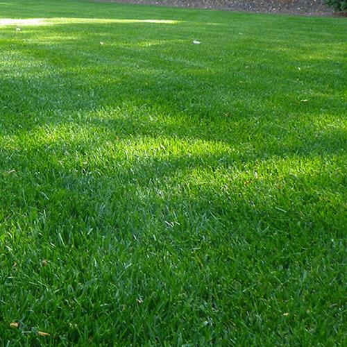 דשא טבעי, סופר אלטורו