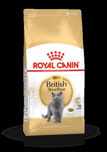 """רויאל קנין חתול בריטי קצר שיער 4 ק""""ג"""