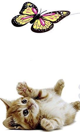 צעצוע לחתול פרפר בתנועה