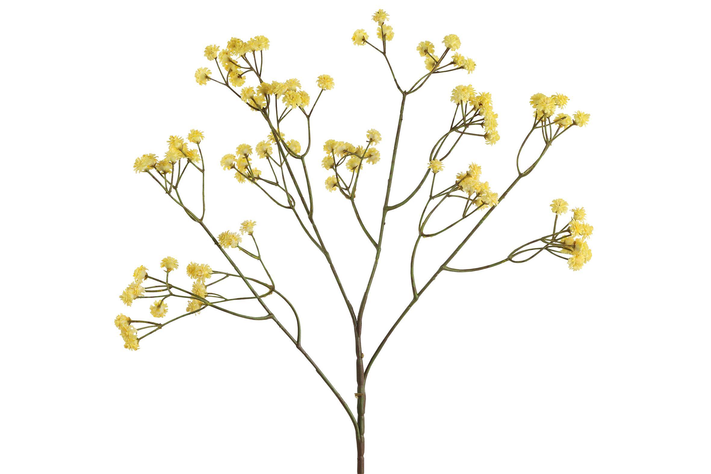 ענף גיבסנית צהוב