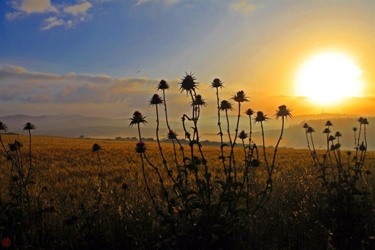 Support Israel and get this picture: Jezreel Valley, Sunrise