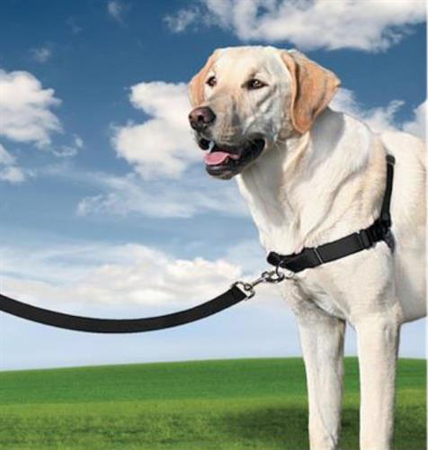 easywalk ריתמת גוףM/L לכלב צבע שחור