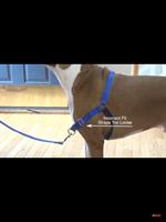 EASY WALK רתמת גוף לכלב מידה L צבע תכלת