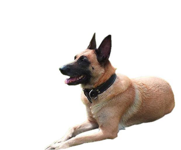 מחסום פלסטיק לכלב מידה 6