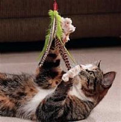 חכה קפיץ+נוצה  לחתול