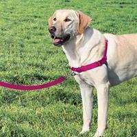 EASY WALK רתמת גוף לכלב מידה M/L צבע אדום תות