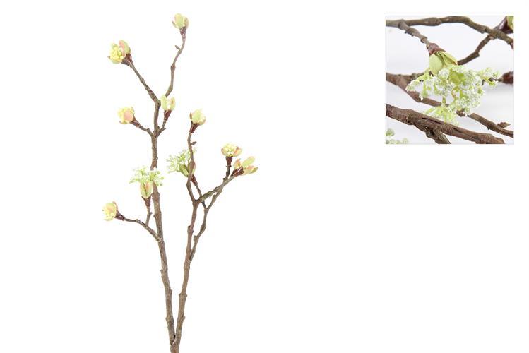 ענף מייפל לבן
