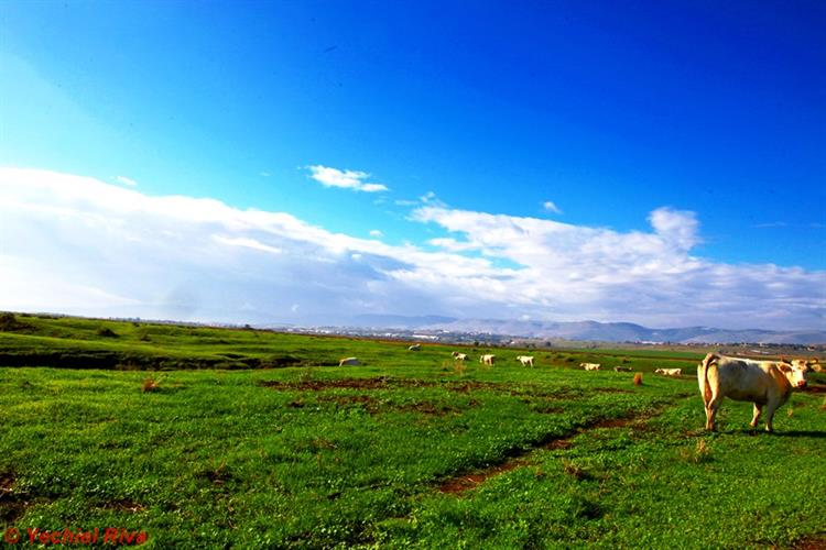 Support Israel and get this picture: Valley of Springs