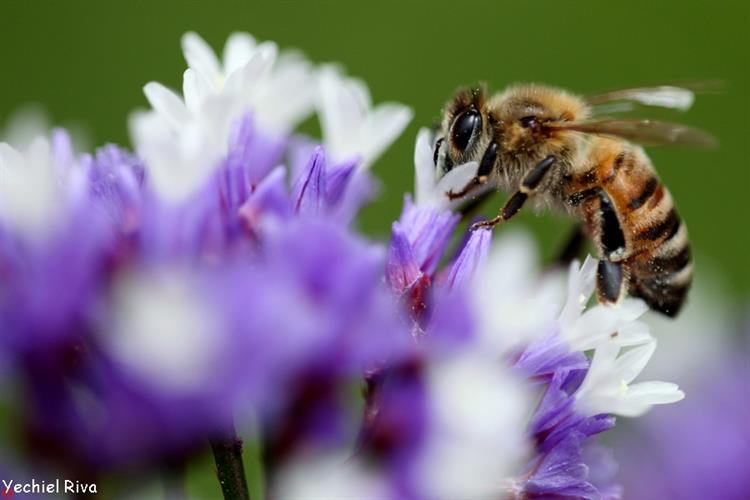 Support Israel and get this picture: Bees