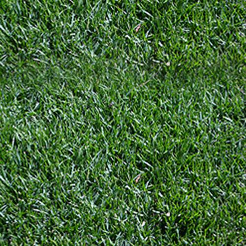 דשא טבעי  מיקס באהי