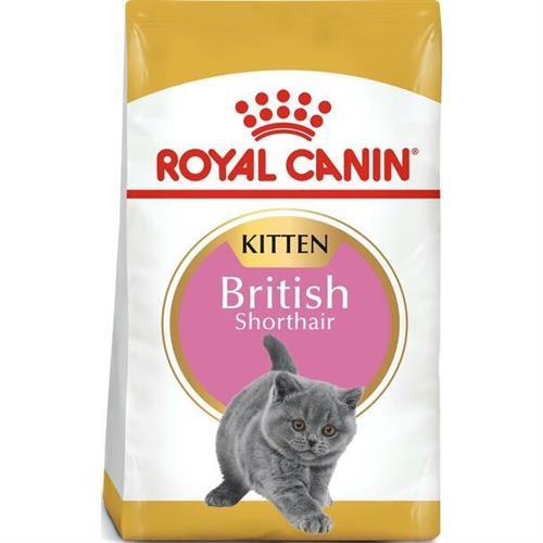"""318255072226 מזון יבש לגורי חתול מגזע בריטי ולחתולות הירות ומניקות 4 ק""""ג Royal Canin רויאל קנין"""