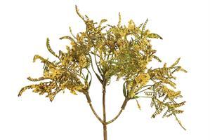 ענף עדעד-LIMONIUM
