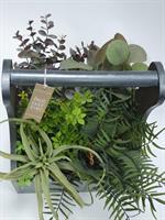 גינת צמחים