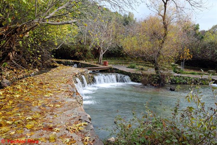 Support Israel and get this picture: Banias Nature Reserve
