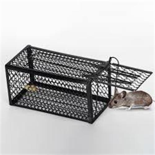 מלכודת עכברים כלוב קטן