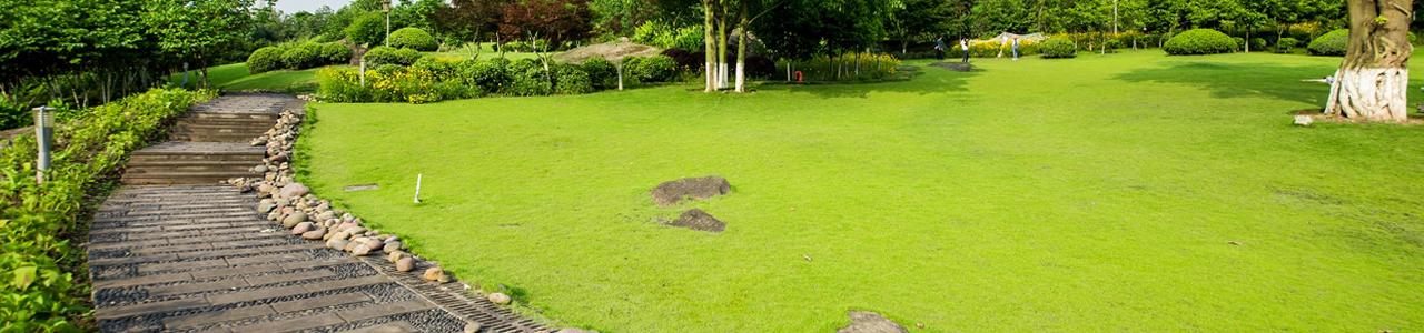 בשביל הדשא דשא טבעי
